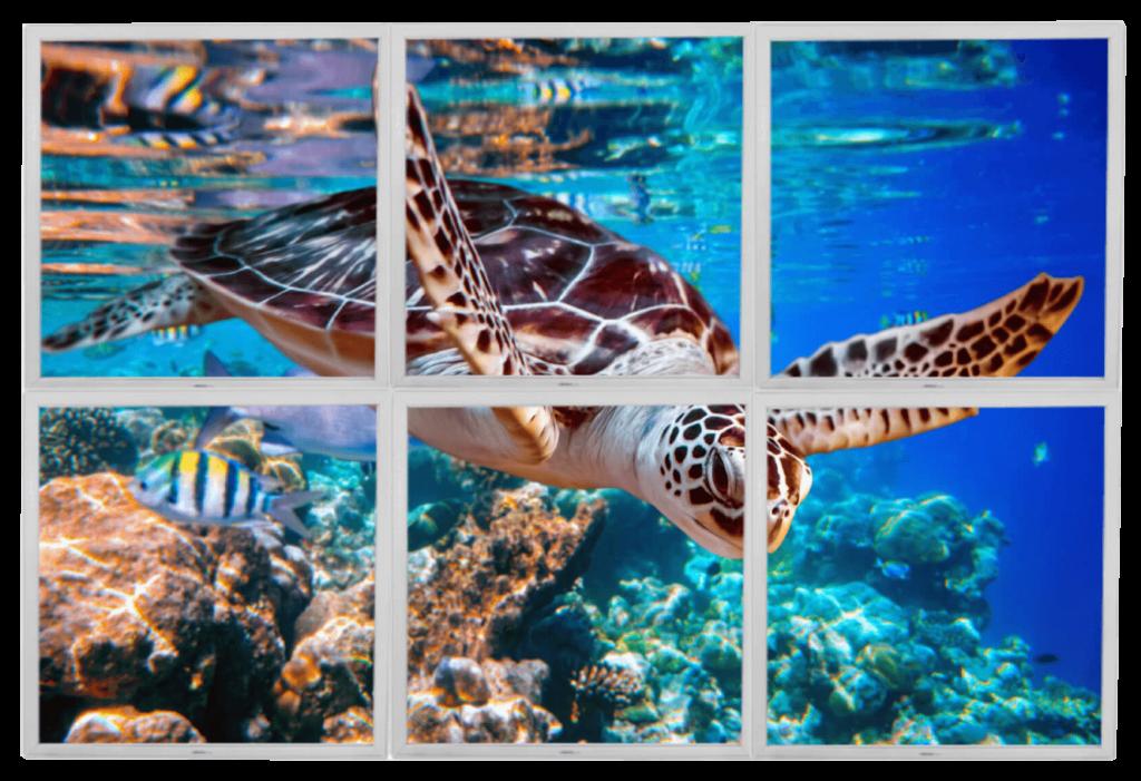 Lumigo Swimming Turtle PNG